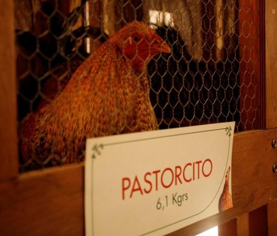 Aquí está Pastorcito
